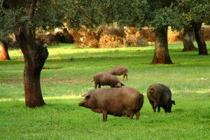Lonja porcino iberico-Diaz del Prado